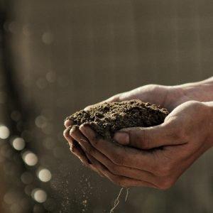 Compost & Soil Amendments
